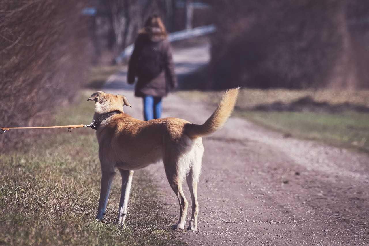 Cane abbandonato: come comportarsi